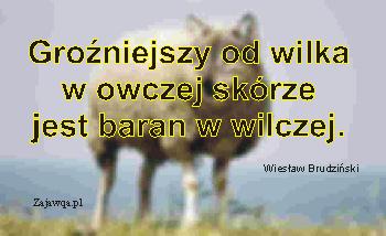 Wilk w owczej skórze - zajawqa